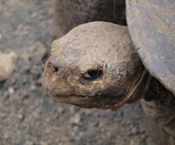 animals-who-are-up-to-something-turtle-tortoise