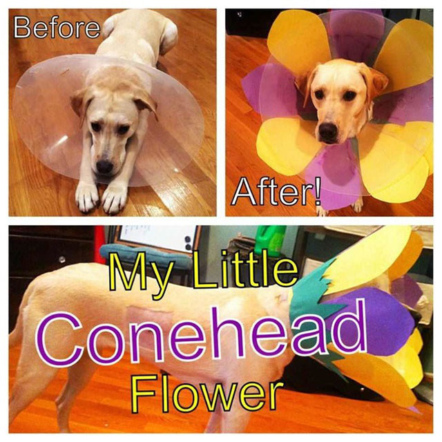 cone_of_shame_4
