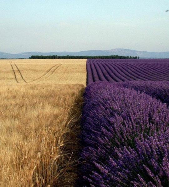 Contrast In Crops