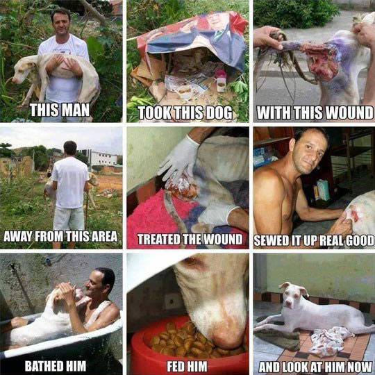 cool-dog-rescue-wounded-heal