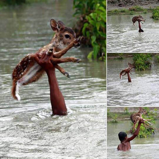 Helping A Tiny Deer Cross The River