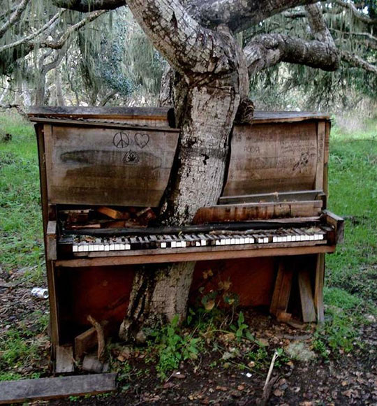 cool-tree-growing-inside-piano-forest