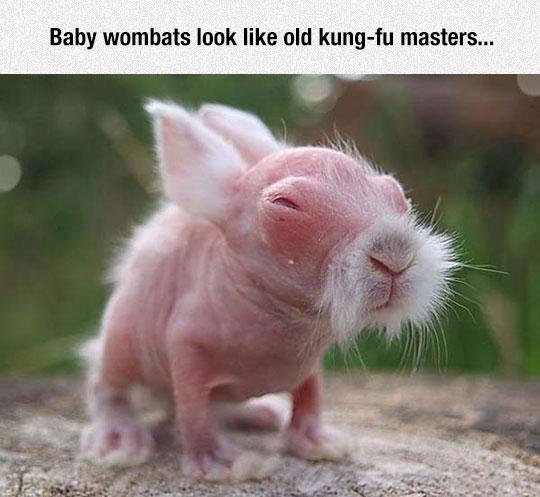 Baby Wombat: It's Splinter From The Teenage Mutant Ninja Turtles