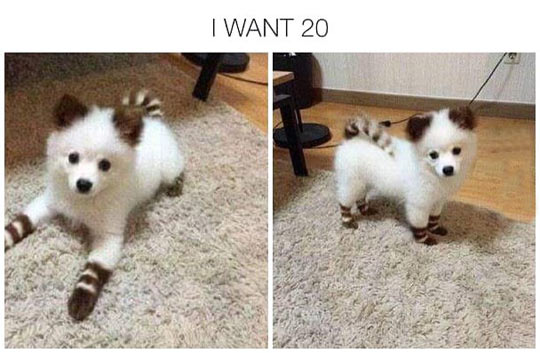 This Dog Looks Like A Pokemon