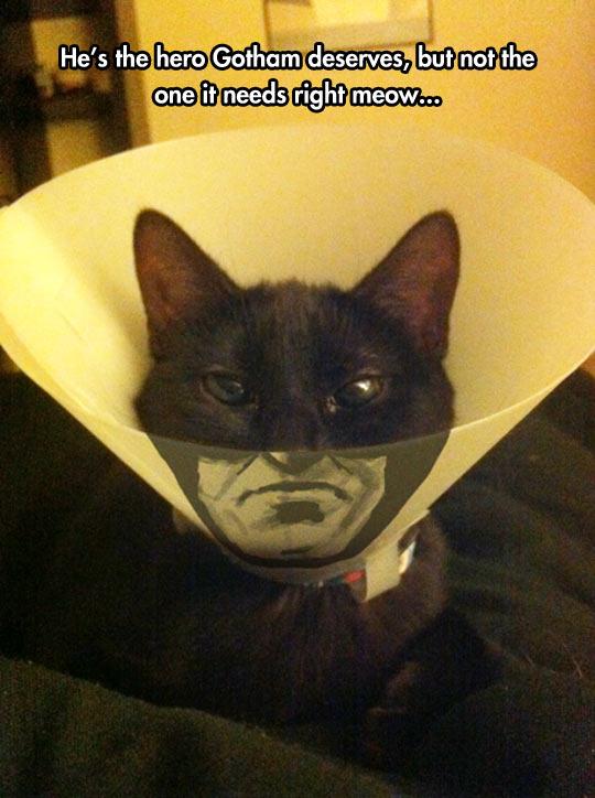 funny-Batman-cat-cone-shame