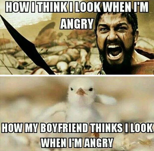 funny-Leonidas-cute-chick-angry