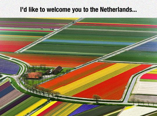 funny-Netherlands-field-plantation-colors