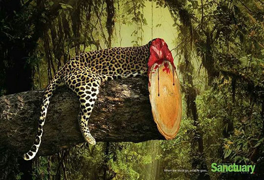 When The Tree Goes, Wild Life Goes Too