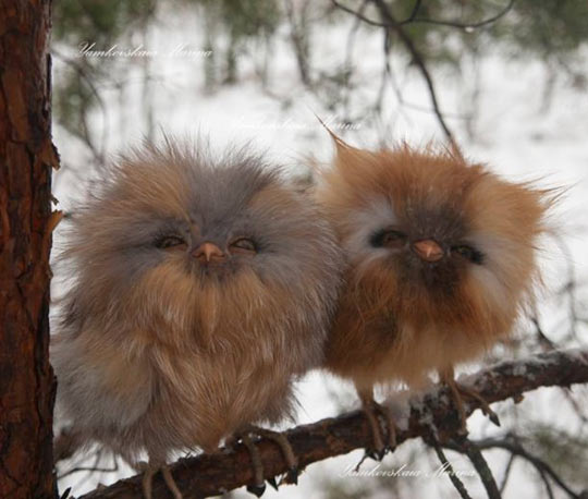 funny-baby-owl-forest-snow