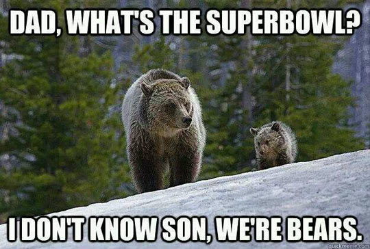funny-bear-father-son-Superbowl