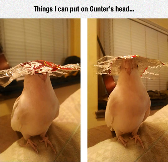 Everything Looks Good On A Bird