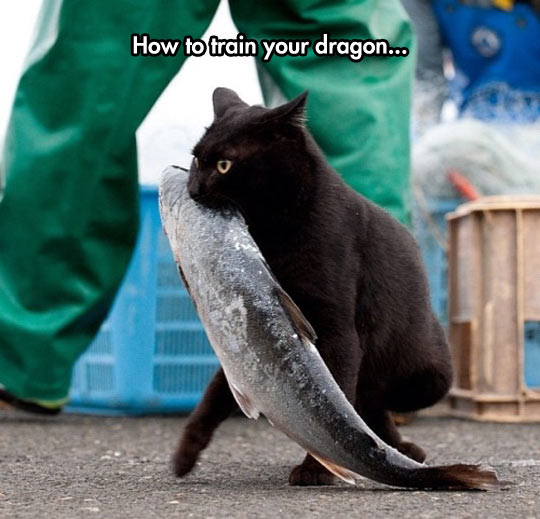 funny-black-cat-stealing-fish