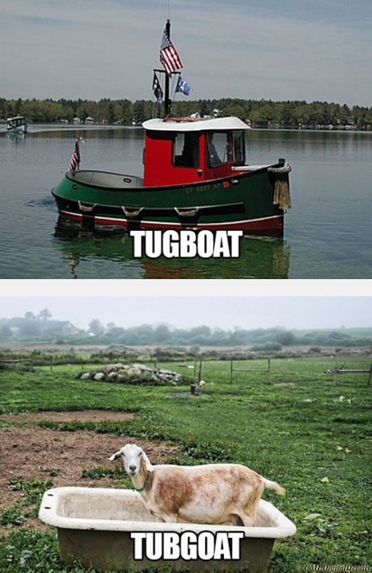 funny-boat-lake-tub-goat