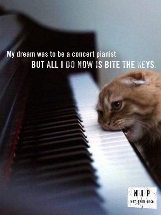 funny-cat-biting-keys-piano