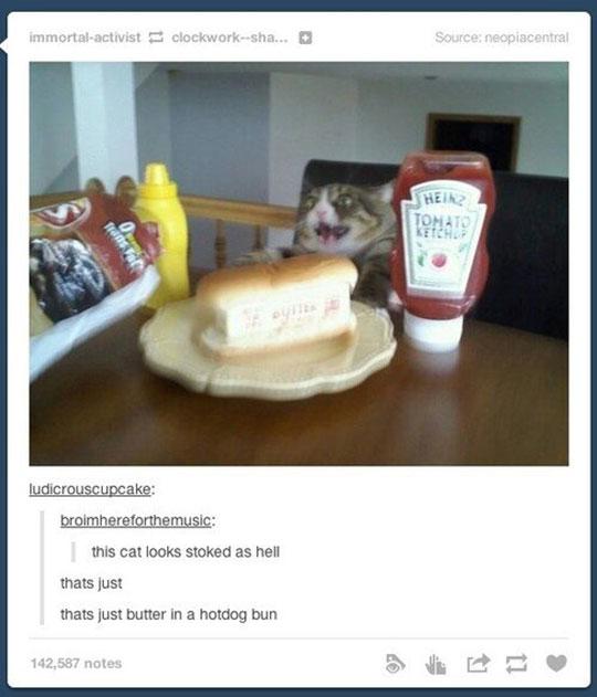 funny-cat-butter-bun-crazy