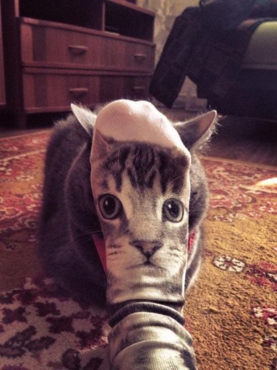 funny-cat-foot-sock-face-drawing