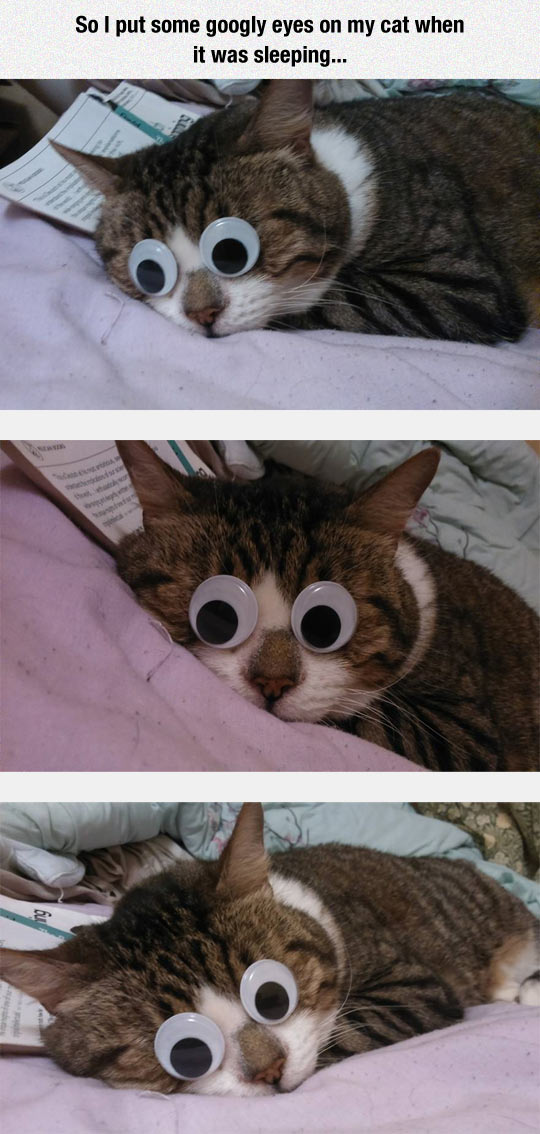 Googly Cat
