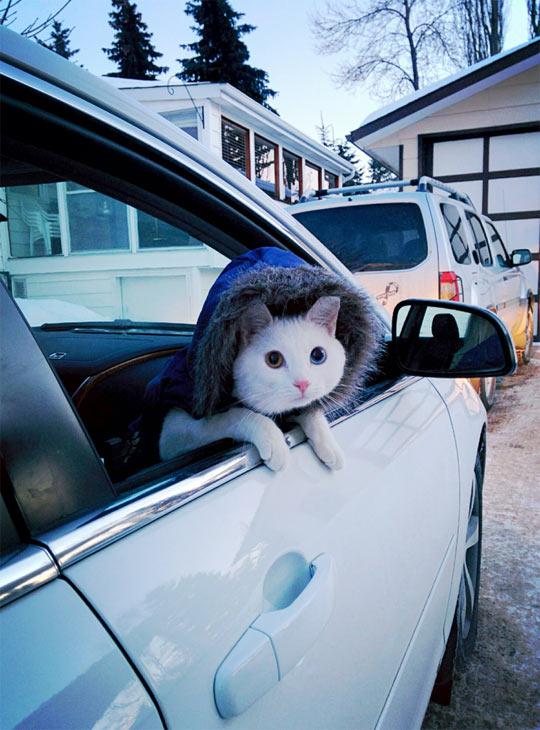 funny-cat-jacket-hoodie-car-winter