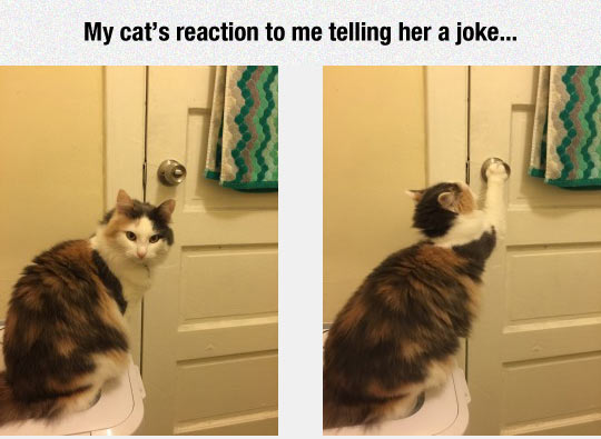 funny-cat-joke-door-trying-open