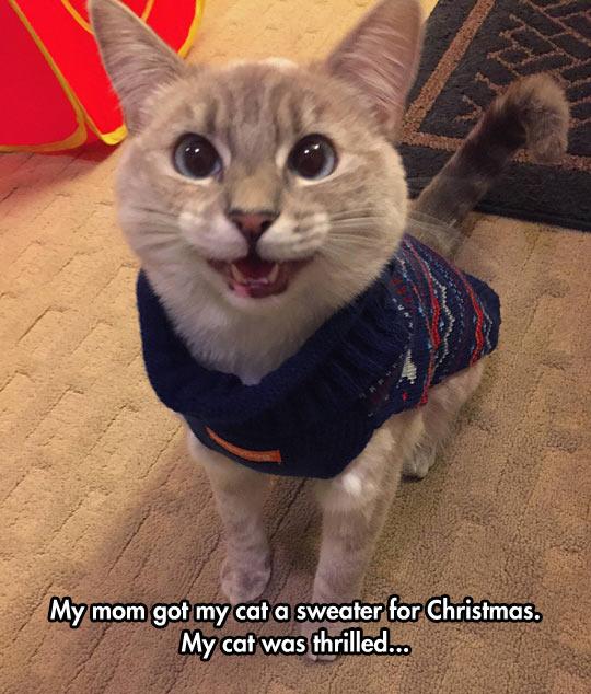 Your Cat Has Christmas Spirit
