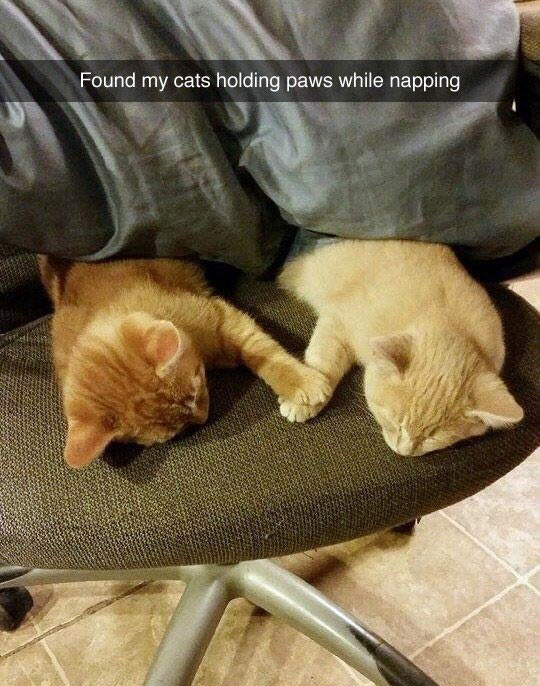 funny-cats-holding-paws-napping