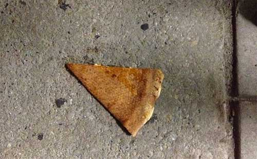 funny-dammit-moments-dropped-pizza-slice