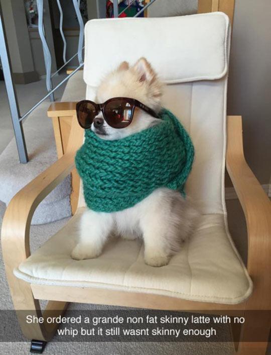 funny-dog-fancy-sun-glasses-scarf