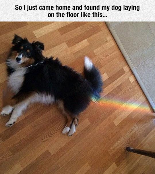 funny-dog-floor-rainbow-laying