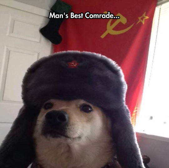 funny-dog-hat-Russia-comrade
