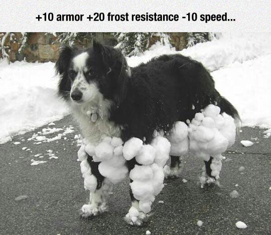 funny-dog-snow-stick-legs-armor