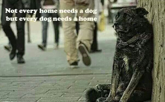 funny-dog-street-home-sad