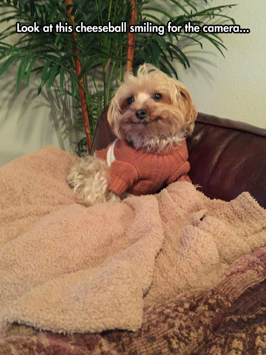 funny-dog-sweater-smiling-couch