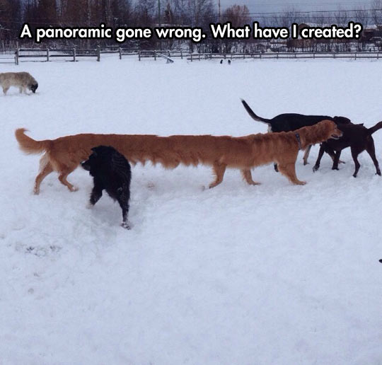 funny-dogs-snow-panoramic-picture-wrong