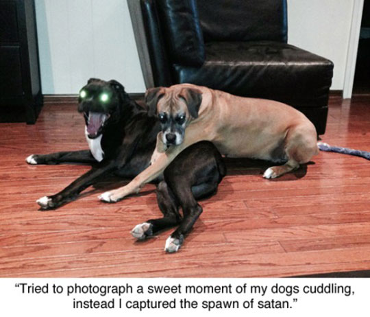 funny-dogs-sweet-moment-evil-eyes