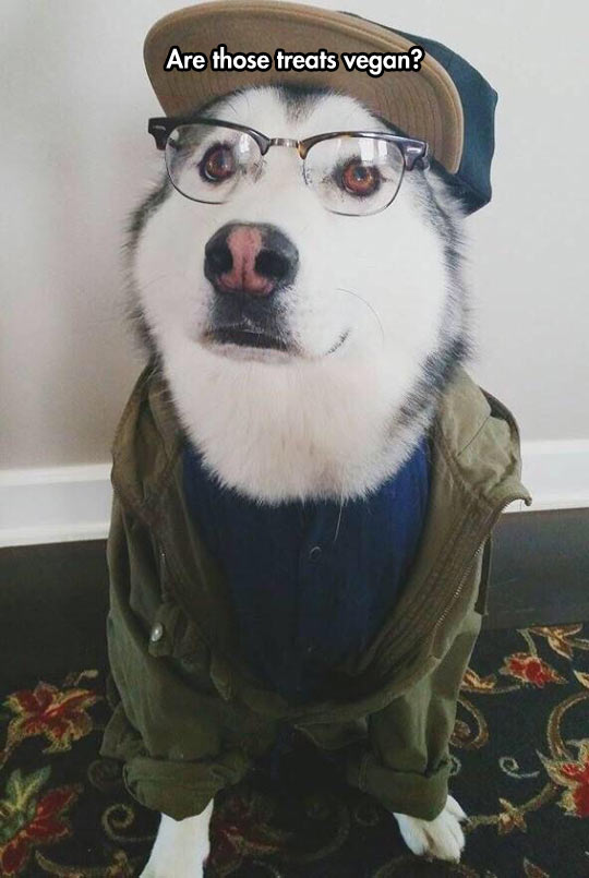 Hipster Dog Is A Little Presumptuous