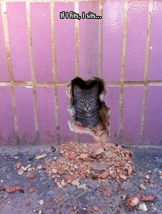 funny-hole-wall-cat-sit-brick
