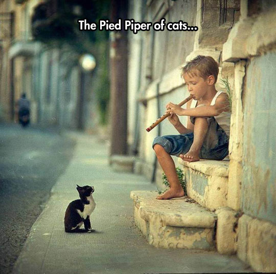 funny-kid-flute-music-cat-street