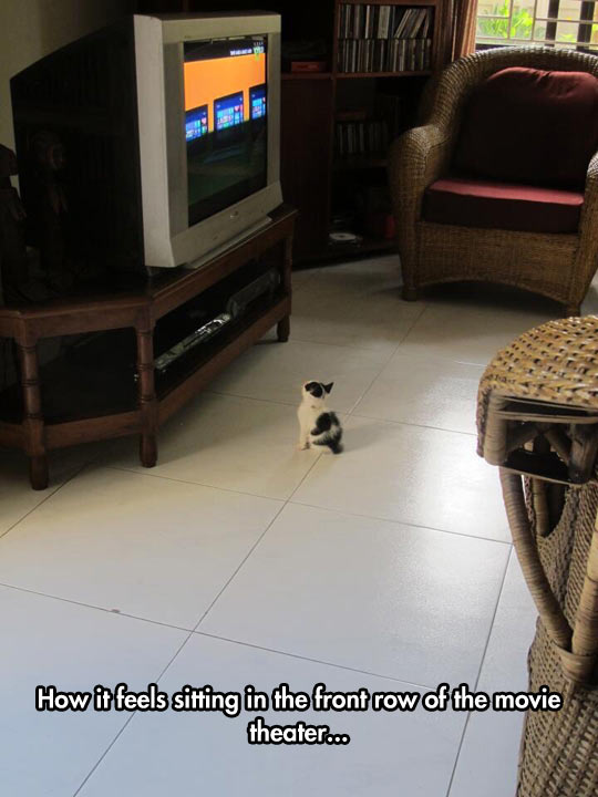 funny-little-cat-watching-TV