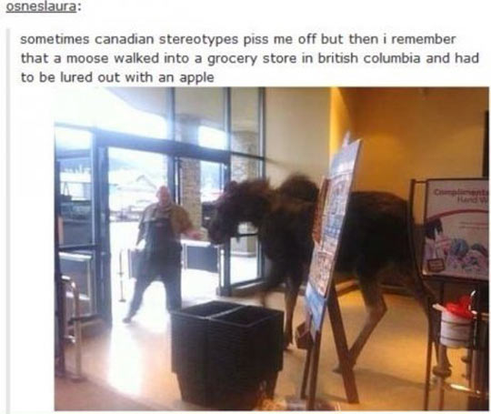 Tired Of Canadian Stereotypes