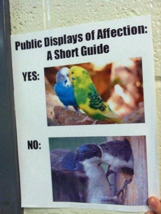 funny-parrot-kiss-affection-public-guide