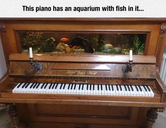 Very Classy Aquarium