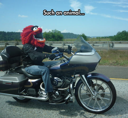 funny-puppet-motorbike-road-helmet