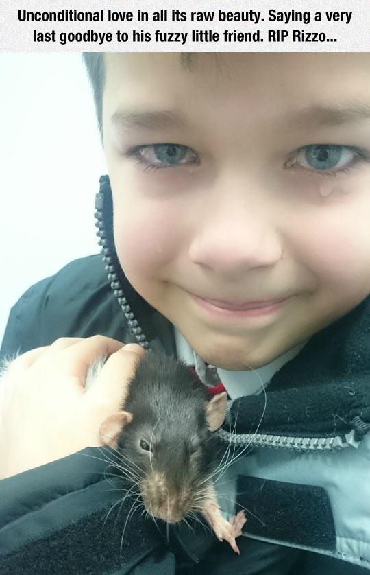 funny-rat-pet-dying-kid-tears