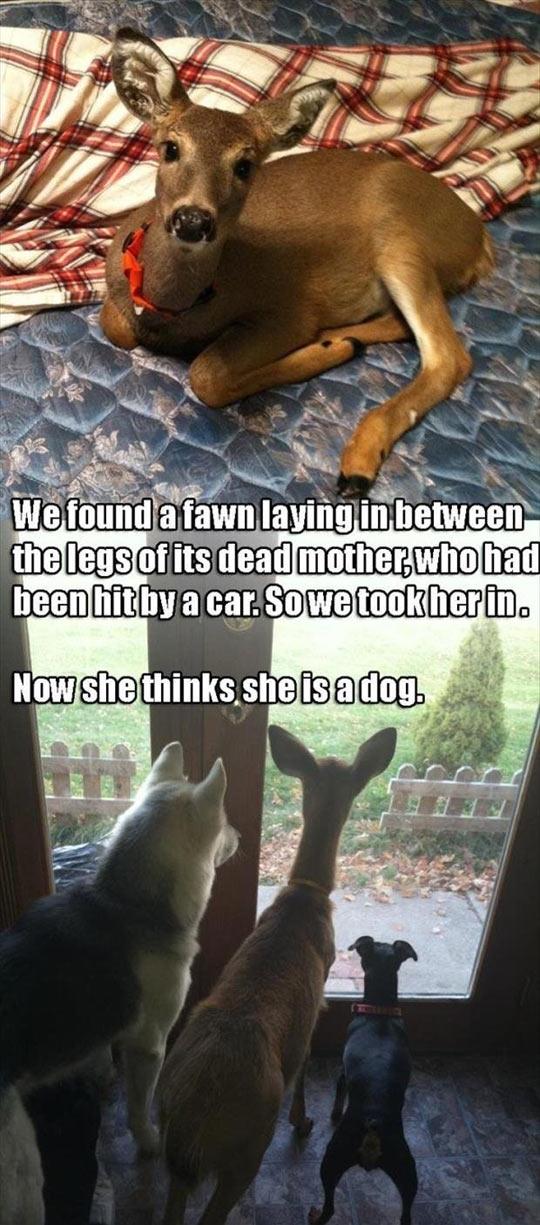 Deer Are Fine Pets