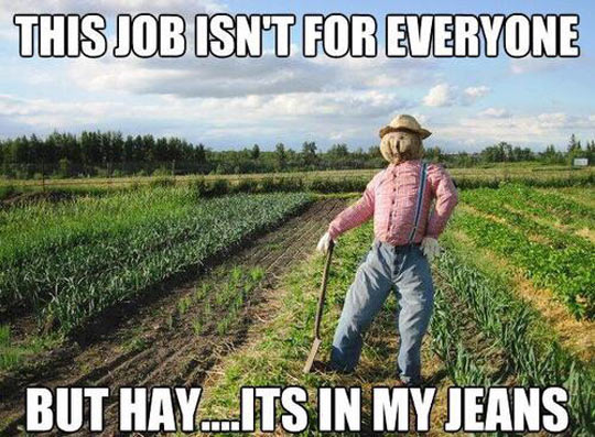 funny-scarecrow-jeans-fields-plantations
