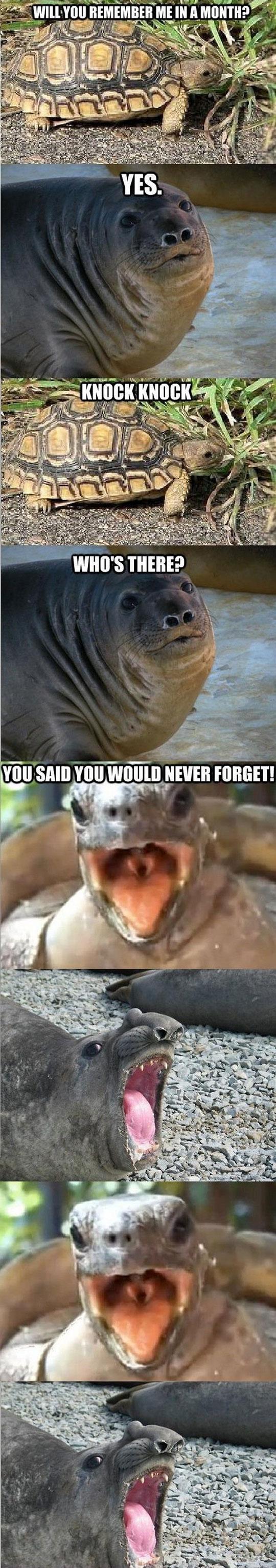 funny-sea-lion-turtle-joke-forget