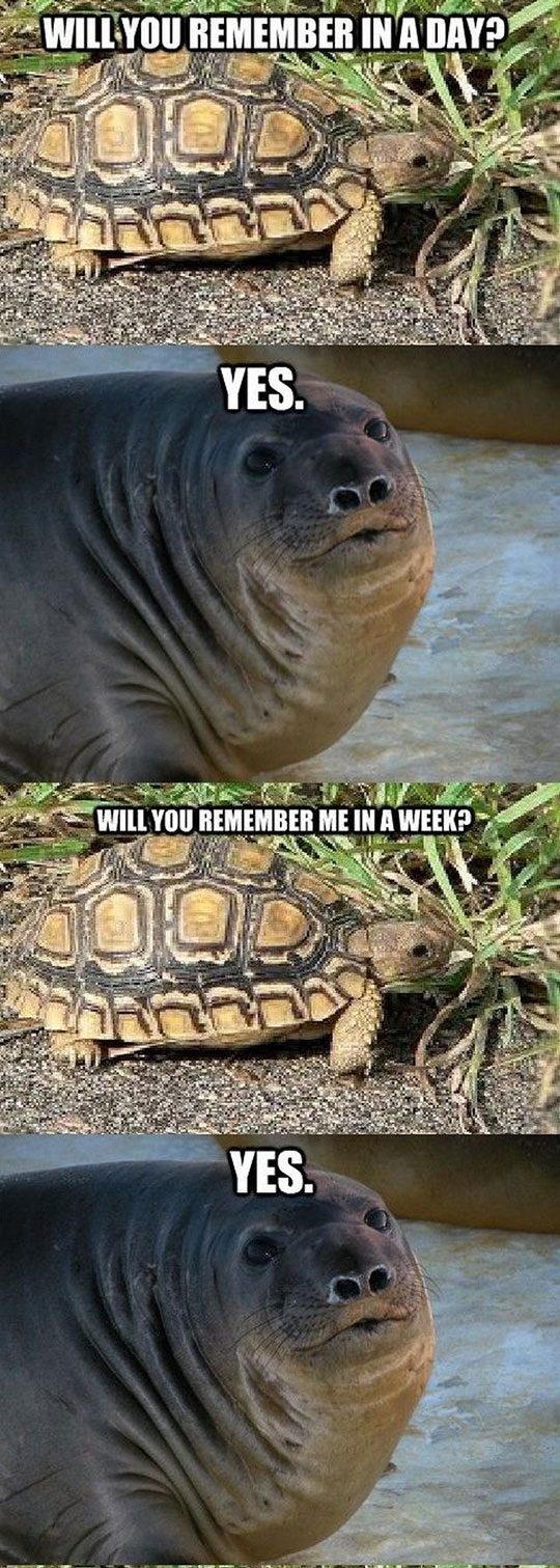 It Was Just A Joke, Turtle