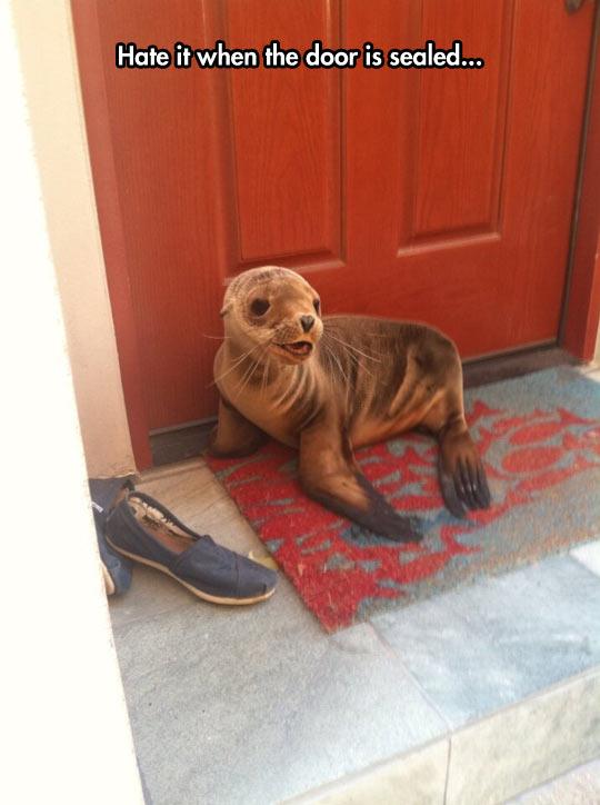 Bad Luck, Seal