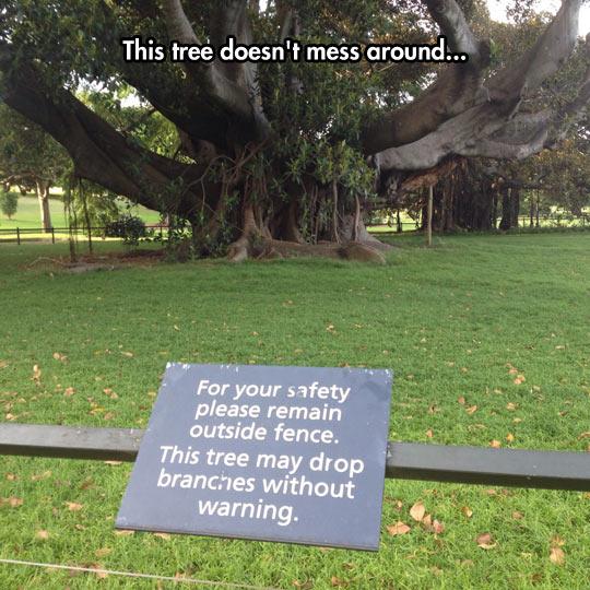 Beware Of The Tree