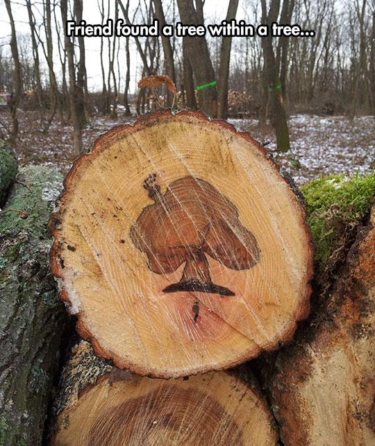 funny-tree-stomp-wood-lookalike